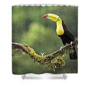 Keel-billed Toucan Perched Under The Rai Shower Curtain