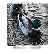 Keep Swimming Shower Curtain