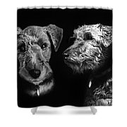 Keeper The Welsh Terrier Shower Curtain