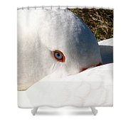 Keeping A Watchful Eye Shower Curtain