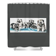 Keeshond Puppies Shower Curtain
