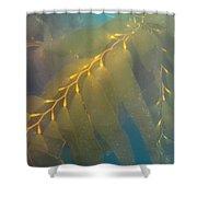 Kelp 2 Shower Curtain