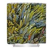 Kelp On A Rock Shower Curtain