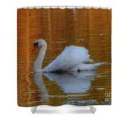 Kensingtons Swan 1  Shower Curtain