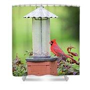 Kentucky Cardinal  Shower Curtain