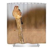 Kestrel In Evening Light Shower Curtain