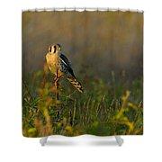 Kestrel In Meadow Shower Curtain