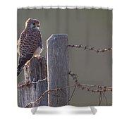 Kestrel On Rustic Fence Shower Curtain