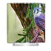 Kestrel On The Cones Shower Curtain