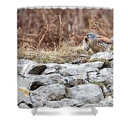 Kestrel With Prey Shower Curtain