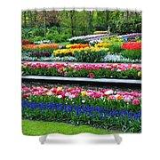 Keukenhof Tulips Ornamental Garden  Shower Curtain