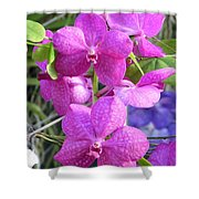 Kew Orchid Shower Curtain