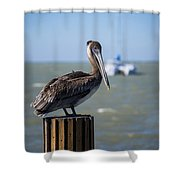 Key Largo Florida Pelican Yacht Shower Curtain