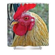Key West Chicken Shower Curtain