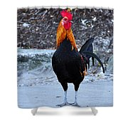 Key West Cock Shower Curtain