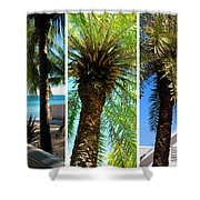 Key West Palm Triplets Shower Curtain by Susanne Van Hulst