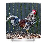Key West Rooster 2 Shower Curtain