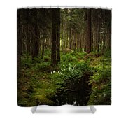 Keys In The Woods Shower Curtain