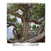 Kiawe Tree Shower Curtain