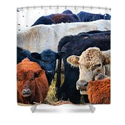 Kibler Valley Cows Shower Curtain