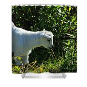 Kid Goat In Bushes Shower Curtain