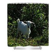 Kid Goat On A Farm Shower Curtain