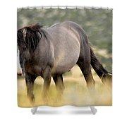 Kiger Stallion Shower Curtain