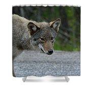 Killarney Coyote Shower Curtain