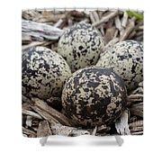 Killdeer Eggs Shower Curtain