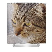 King Cat Shower Curtain