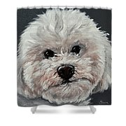 King Cavalier And Toy Poodle Mix Shower Curtain