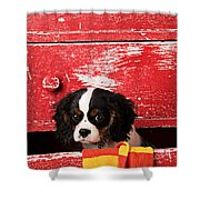 King Charles Cavalier Puppy  Shower Curtain