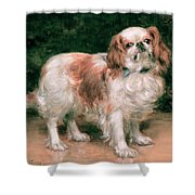 King Charles Spaniel Shower Curtain by George Sheridan Knowles