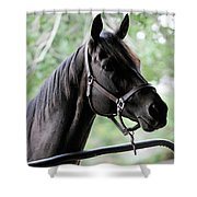 King Congie, Looking Ahead Shower Curtain