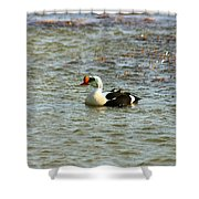 King Eider Shower Curtain