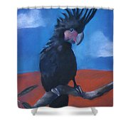 King Of Cockatoos Shower Curtain