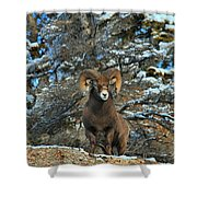 King Of The Canadian Rockies Shower Curtain