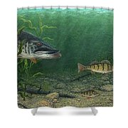 King Of The Cove Shower Curtain