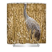 King Of The Delta Cornfield Shower Curtain