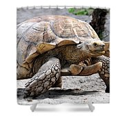 King Of The Galapagos Shower Curtain