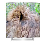 King Of The Jungle Profile  Shower Curtain