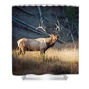 King Of The Madison Shower Curtain