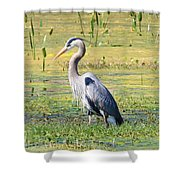 King Of The Marsh Shower Curtain