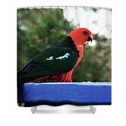 King Of The Parrots Shower Curtain