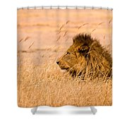 King Of The Pride Shower Curtain by Adam Romanowicz