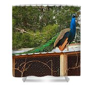 King On His Throne Shower Curtain