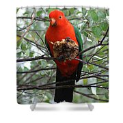 King Parrot Shower Curtain