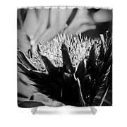 King Protea Exotic Tropical Flowers Shower Curtain