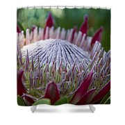 King Protea Island Flowers Jewel Of The Garden Shower Curtain