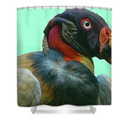 King Vulture II Shower Curtain